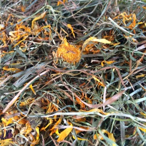 Squidgypigs - 5aDayHay Review -  look at all that marigold