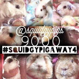 Squidgypigs - #squidgypigaway4