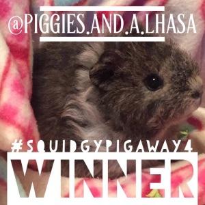 squidgypigaway4 -  winner