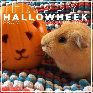 Squidgypigs - Happy Halloween - Guinea Pig Pumpkin