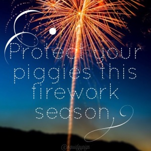 Squidgypigs - Guinea Pigs and Fireworks do not mix