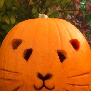 Squidgypigs - GuineaPig Pumpkin