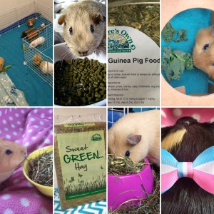 Squidgypigs Guinea Pig Product Reviews