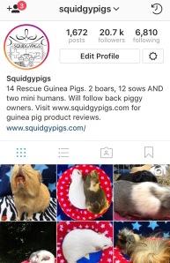 www.instagram.com/Squidgypigs