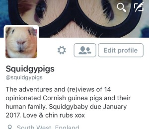Squidgypigs - Twitter