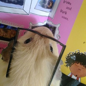 Squidgypigs - Ned's favourite type of Guinea Pig was 'female'.