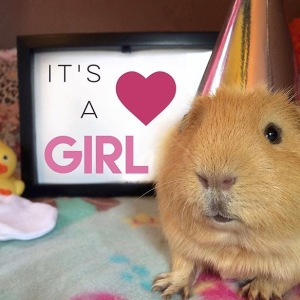 Squidgypigs - It's a girl!