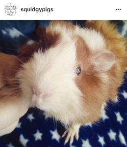 Squidgypigs - My First Instagram Pig Pic!