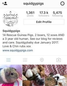 Squidgypigs - Instagram