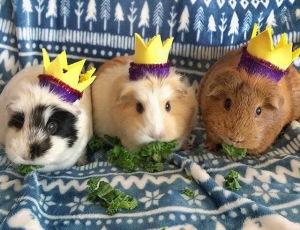 Squidgypigs - We Three Kings