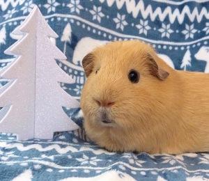 Squidgypigs - Oh Christmas Tree, Oh Christmas Tree