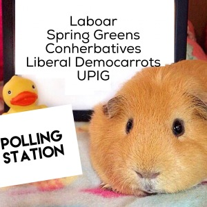 Squidgypigs - Guinea Pigs at Polling Station