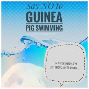 Squidgypigs - Say no to Guinea Pig Swimming!