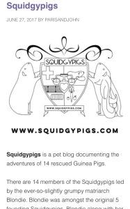 Squidgypigs