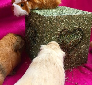 I Love Hay Cube - Ethel proves you don't have to be big to have fun...