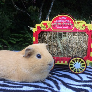 Haypigs Wheek Wagon Review