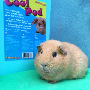 Snugglesafe CoolPod Guinea Pig Review