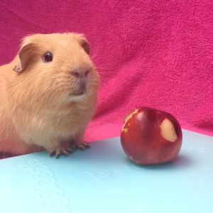 Can Guinea Pigs Eat Nectarines?