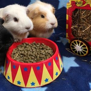 Haypigs! Food Craving Tamer