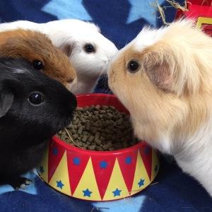 Haypigs! Food Craving Tamer Review