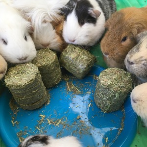 The whole herd enjoys Meadow Hay Cookies