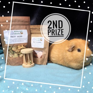 #squidgypigaway1 2nd prize