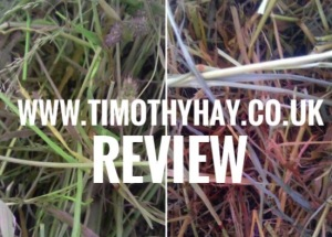 www.timothyhay.co.uk review.