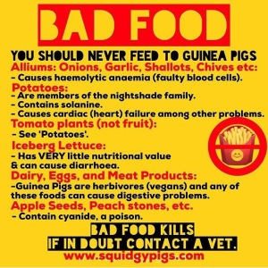 Bad Food for Guinea Pigs