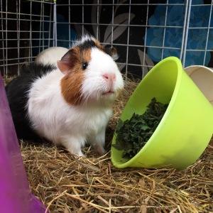 Baby Yum Yum loves Peppermint.