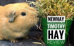 Newhay Timothy Hay