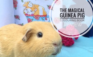 The Magical Guinea Pig Colouring Book