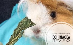 For Haymazing Pets Echinacea
