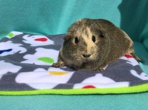 Piggies In Blankets Waterproof Lap Pad Review