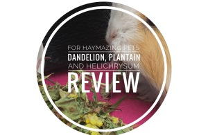Dandelion, plantain and helichrysum
