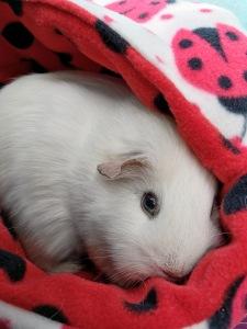 Princess Bagel-Baby - Piggie Pod lover.