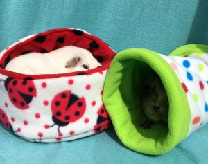 Princess Bagel-Baby and Doughnut in their Piggies In Blankets beds.