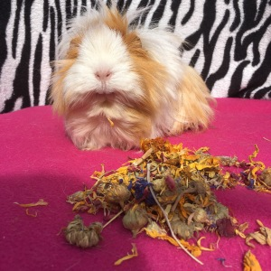 Blondie's favourite bits were the rose and sunflower petals...