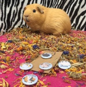 Birdie Tam Guinea Pig Badge Review