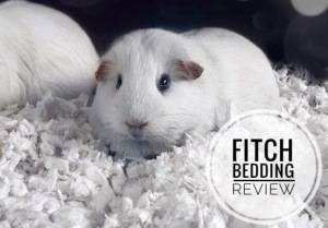 Fitch Guinea Pig Bedding Review