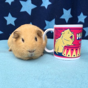 Haypigs Mugs are also illustrated by Stephen Sharpe.