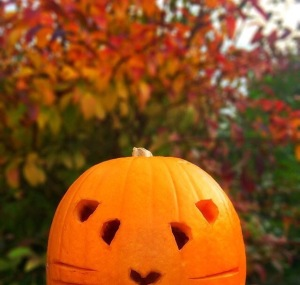 Last year's Guinea Pig Pumpkin