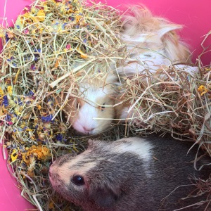 Mix with hay for natural foraging behaviour.