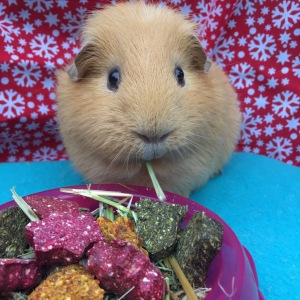 Rosewood Naturals Christmas Stocking Guinea Pig Review