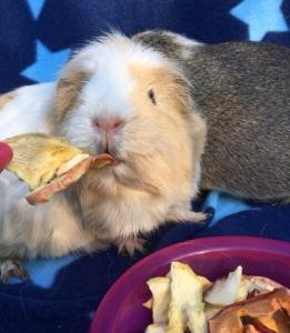 Miley enjoying a handfed Apple Snack.