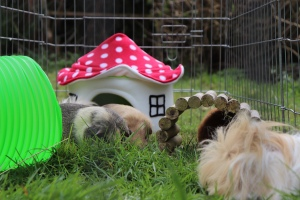 Snugglesafe Bunny Warren Review