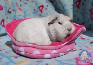 Princess Bagel-Baby enjoying her Cuddle Cup