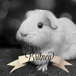 Britney Squidgypigs