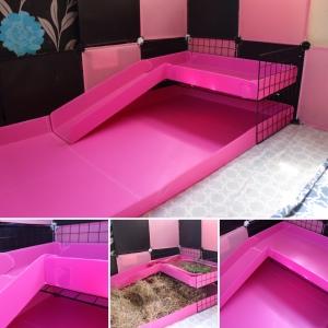 Pink guinea pig correx