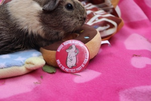 Haypigs Pocket Mirrors Review