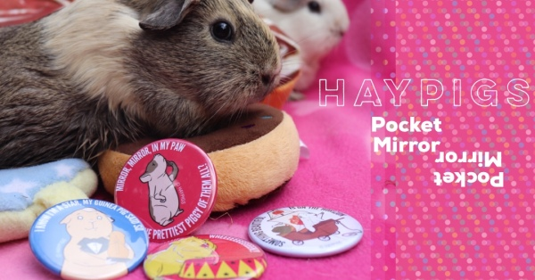 Guineapig Product Reviews Squidgypigs